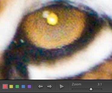03 lightroom riduzione rumore zoom