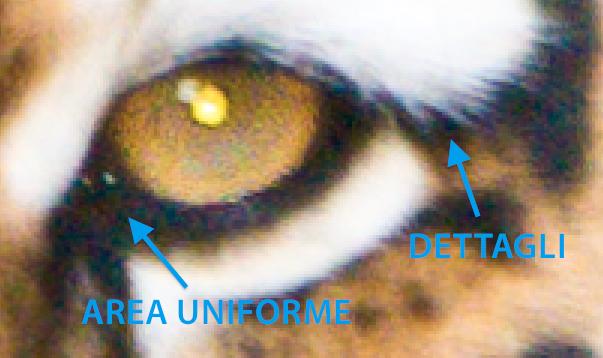 04 lightroom riduzione rumore dettagli area uniforme